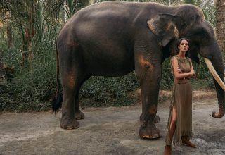 Asya İnsanlarının Hayvanlar İle İlişkisine Birde Bu Açıdan Bakın